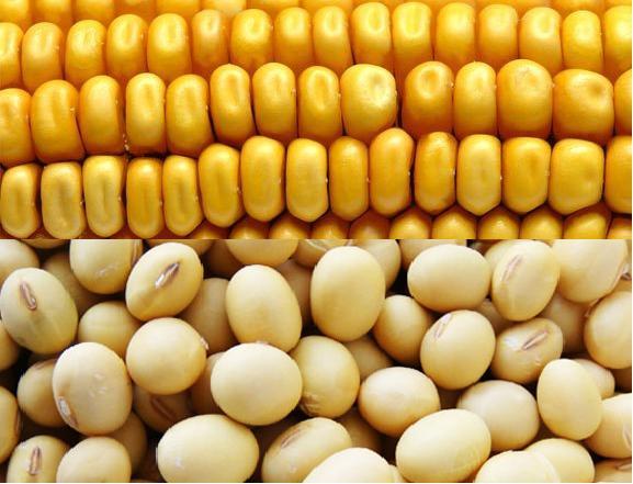 soyabeans_corn